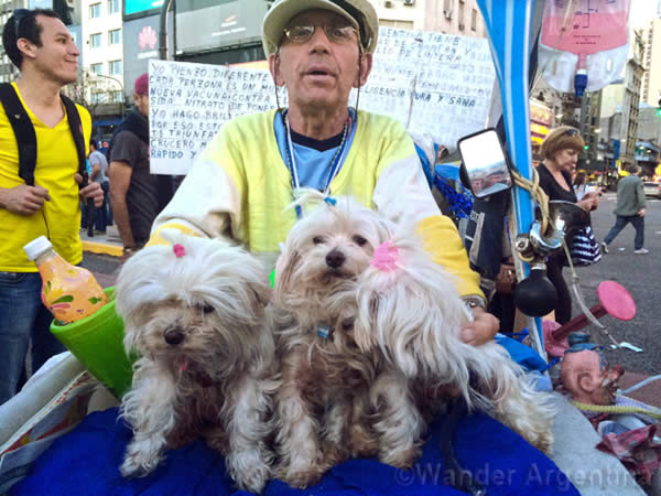 Man with his three toy dogs on bike