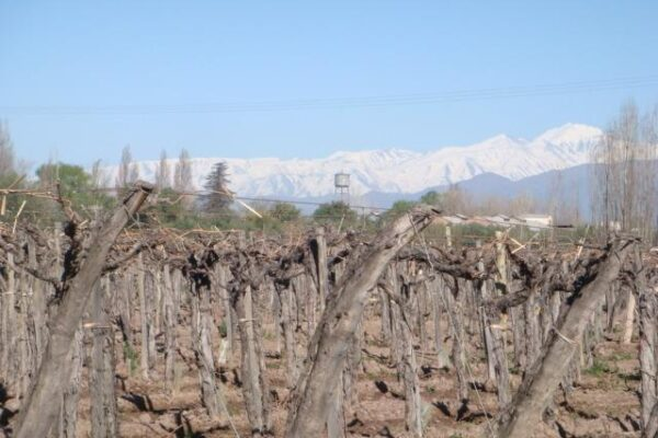 Malbec: Argentina's Signature Wine