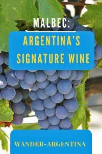 Mendoza grapes: Malbec Argentina's signature red wine