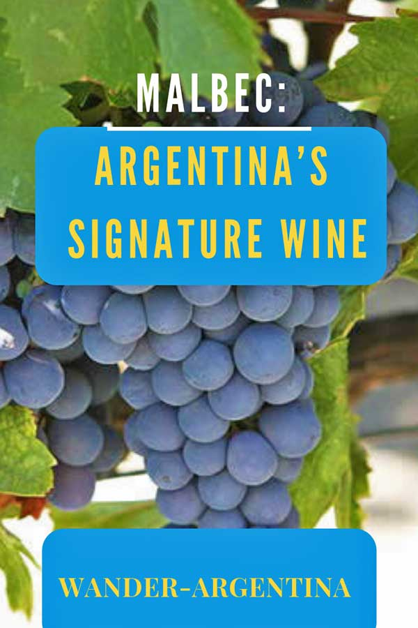 Mendoza grapes: Malbec Argentina's signature red wine
