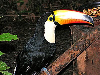 Iguassu Falls Brazil The Best