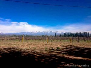 The snowcapped Andes mountains in the distance with a vineyard in the foreground in the Mendoza region of Argentina