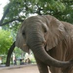 Buenos Aires Zoo: Wildlife in Palermo