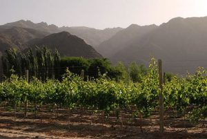 Winery Tours in Cafayate