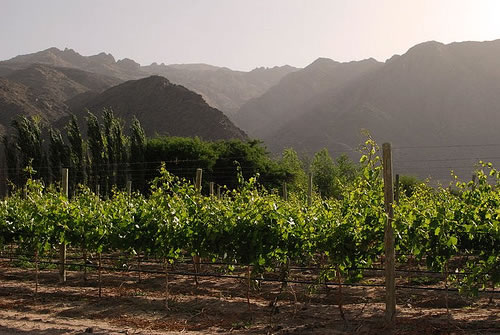 A vineyard in Cafayate, Salta, Argentina