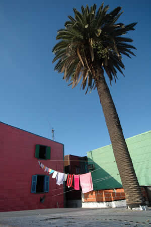 Clothes drying on a line by a palm tree and in front of colorful buildings in the Buenos Aires neighborhood of La Boca