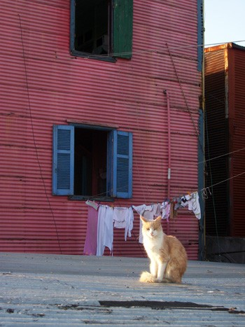 A cat on a rooftop in La Boca, Buenos Aires