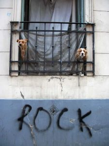 Foto of the Week: Rock Doggies