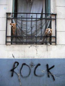 Foto of the Week: Rock Doggies