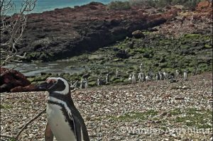 Foto of the Week: Penguin Colony