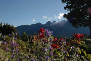 Foto of the Week: Flowers in Bariloche