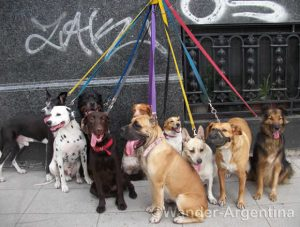 Foto of the Week — Pooches Await the Dog Walker