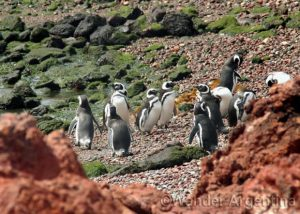 Foto of the Week — Penguins Arriving in Punta Tombo