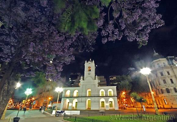 A Jacaranda tree in Plaza de Mayo in front of Buenos Aires' Cabildo building