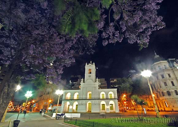 A Jacaranda tree in Plaza de Mayo in front of Buenos Aires' Cabildo building