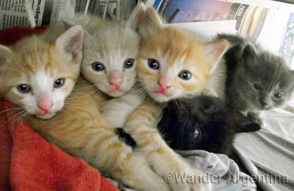Five kittens found living in the ground in the Chubut province of Argentina