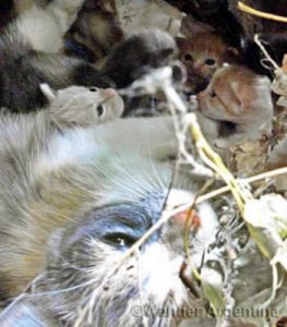 Mama cat and her kittens living in a hole in the ground