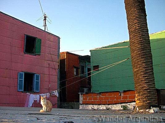 Cat in the sun in La Boca, Buenos Aires Argentina
