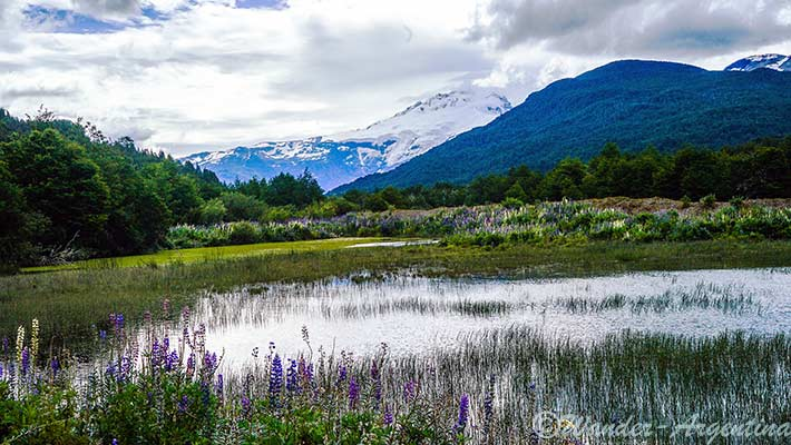 Mount Tronador in Patagonia seen in the distance with a marsh area in the foreground