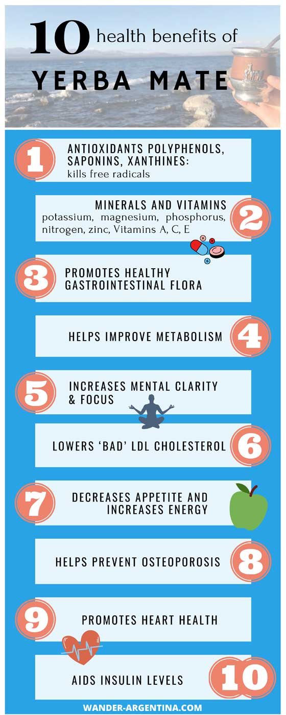 Health benefits of yerba mate according to scientists infograph
